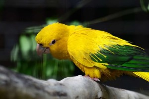 The Yellow Bird