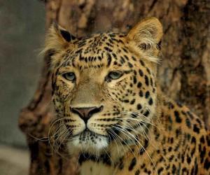 Leopards Spots