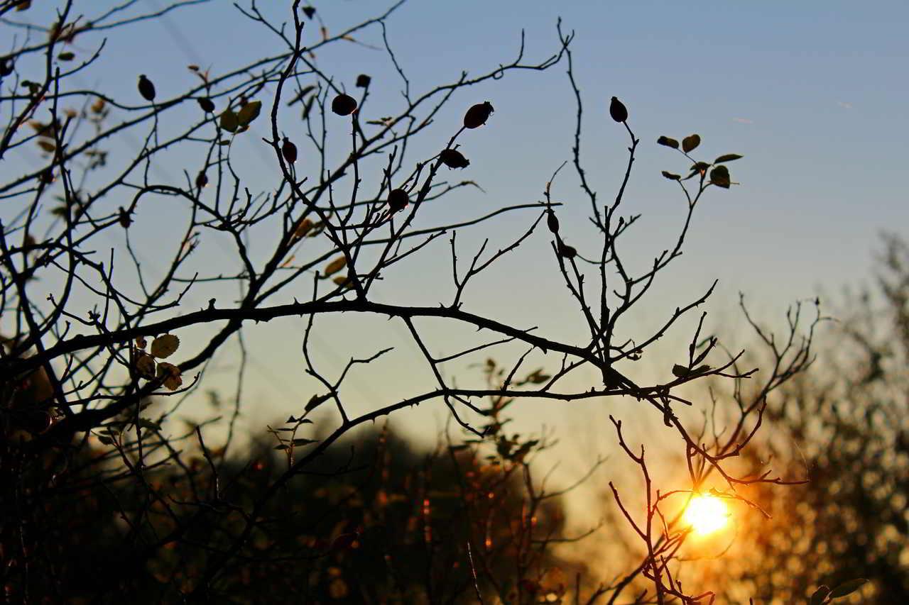 sunset-589654_1920